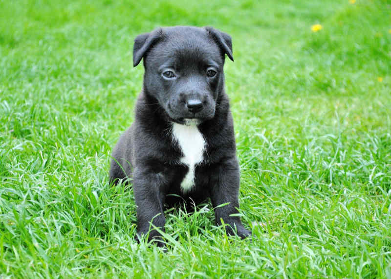Cute puppy sitting on a nice green lawn