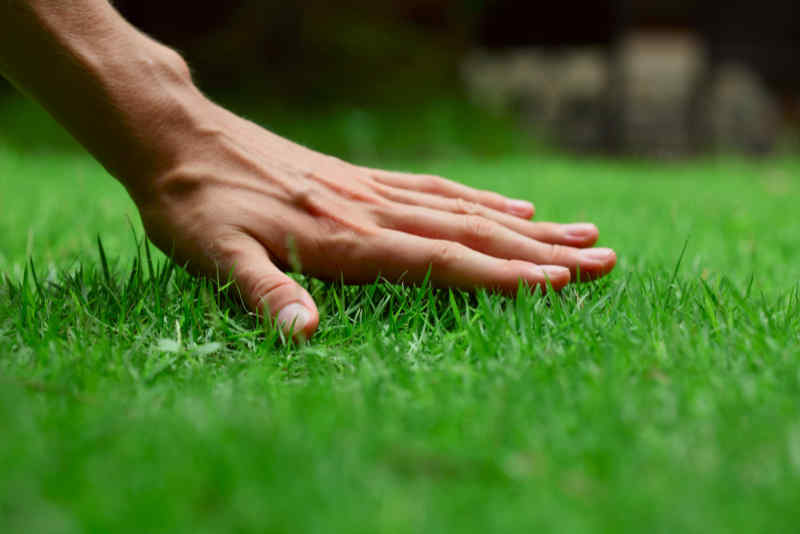 Person running their hand over their beautiful lawn