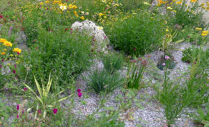 xeriscape garden with easy-care plants and decorative gravel